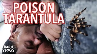 PLAYING WITH A POISONOUS TARANTULA!!!