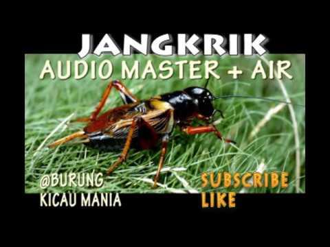 jangkrik audio master + suara air sungai dilengkapi suara terapi brainwave untuk burung berkicau