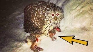 20 SHOCKING Nocturnal Predators