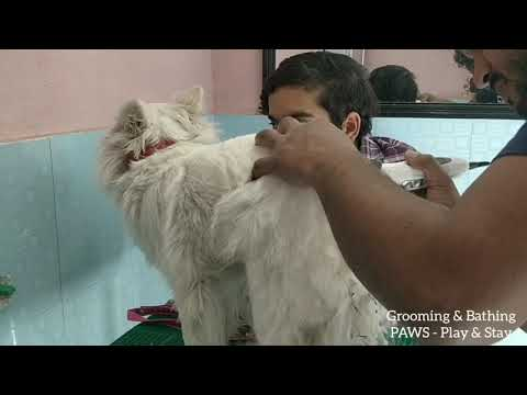 Grooming, Hair trim and Bathing at PAWS - Play & Stay