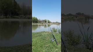 Звуки Природы на Рыбалке Приколы Fishing PRO Темур Тик Ток Shorts