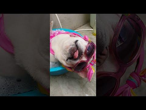 Dog Enjoys a Cool Bath || ViralHog