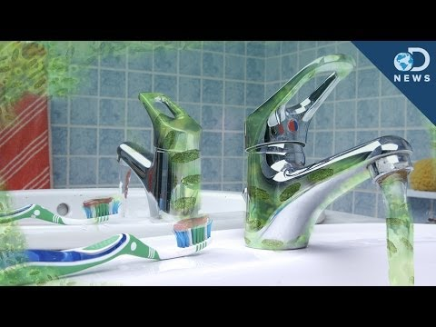 Your Toilet is NOT the Germiest Part of Your House! - DNews  - LmWd8AQn09E -