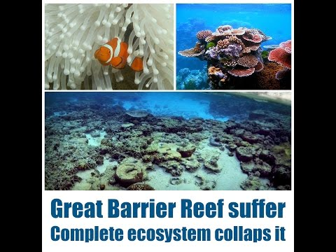 Great Barrier Reef suffer complete ecosystem collapses it