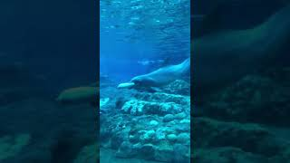Dolphin playing with float @ SeaWorld Orlando, April 2018