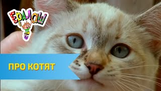 Ералаш Про котят