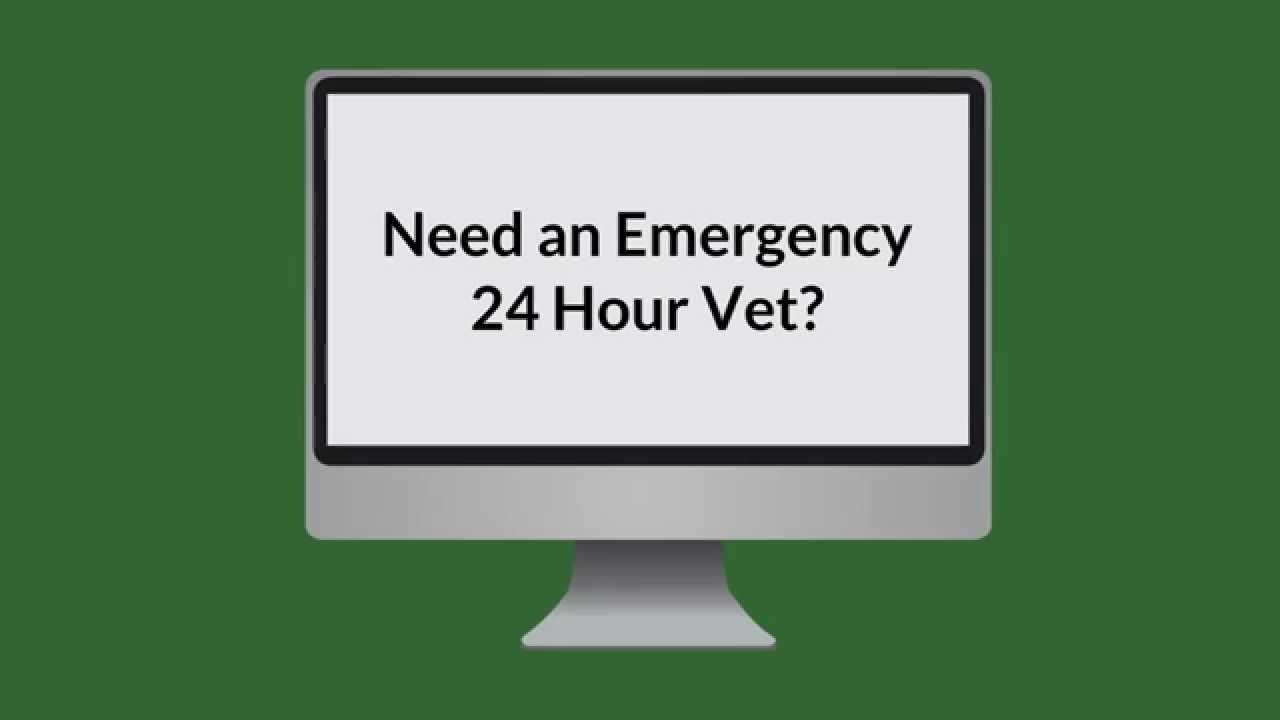 Emergency Vet Edmonton - 24 Hour Veterinary Clinic