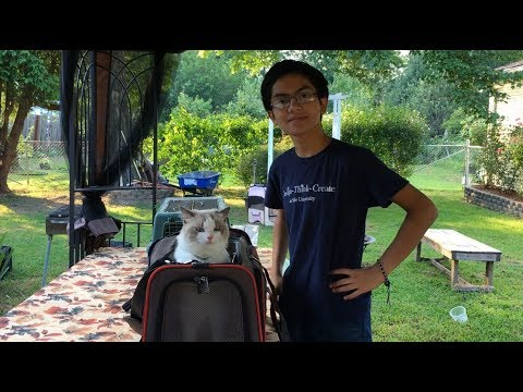 Our Ragdoll's Reaction To Petsfit Expandable Travel Cat/Dog Carrier | Cool Gadgets For Your Pets