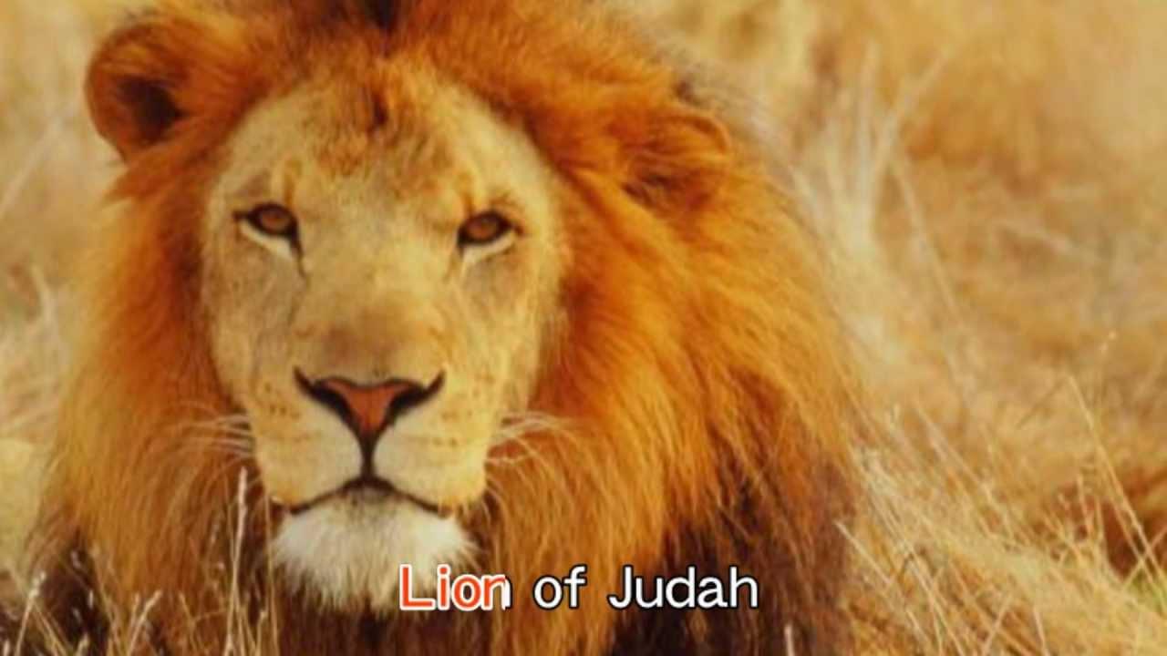 """""""犹大狮子照片""""的图片搜索结果"""