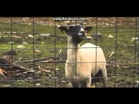 Skrillex Call 911 Goat Remix