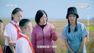 [跟着书本去旅行]在内蒙古的草原上,草不只是绿色的?| 课本中国