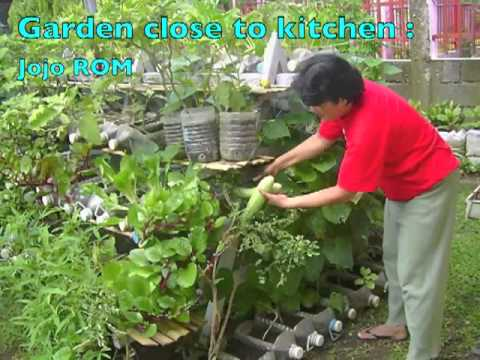 Growing food in containers at home YouTube