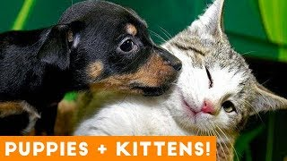 Ultimate Puppy and Kitten Cute Animal Compilation May 2018   Funny Pet Videos