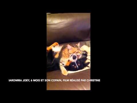 La grande amitié chat-chien
