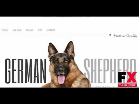 Preview Dog Moto CMS HTML Template TMT