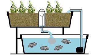 Aquaponie  réalisation d