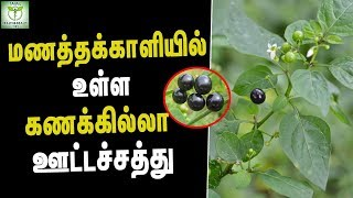 Medicare Benefits of Sukkitti Keerai - Health Tips in Tamil || tamil Health & beauty Tips