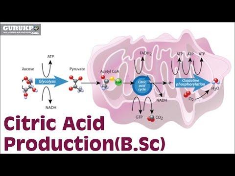 Citric Acid Production(B.Sc)