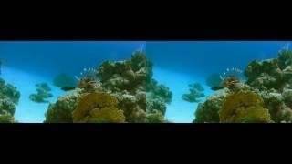 Ocean World 3D   Side by Side SBS Formated for Google Cardboard