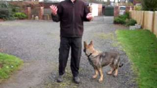 Happydogsnortheast Training Videos Gaining Focus