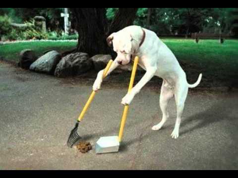 Anjing Dan Sampah - Meggy Z Cipt.  Rhoma Irama