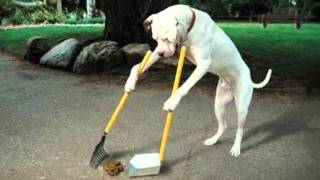 Gambar cover Anjing Dan Sampah - Meggy Z Cipt.  Rhoma Irama