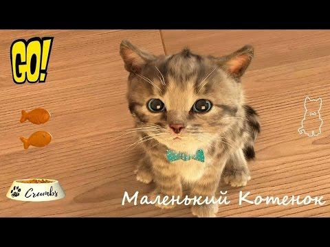 Маленький Котенок Мой Любимый Кот играем с настоящим домашним питомцем Игра мультфильм для Детей