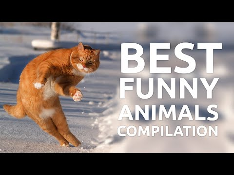 Best Funny Animals Compilation By Failzone
