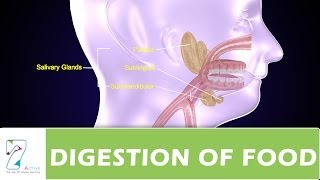 DIGESTION OF FOOD PART _ 01