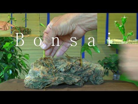 bonsai wurzelgestaltung auf einem objekt doovi. Black Bedroom Furniture Sets. Home Design Ideas