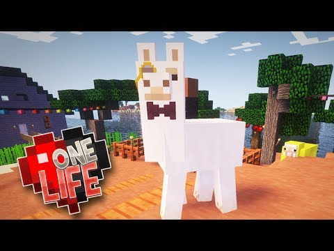 DAPPER LLAMAS & FAIRY LIGHTS - ONE LIFE...