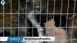 Приют Искитимского района для бездомных животных переехал в другое место