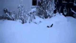 Как коты гуляют зимой?  )))