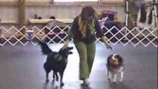 Corinne Lawson dances a Canine Freestyle Brace routine with Genevie...