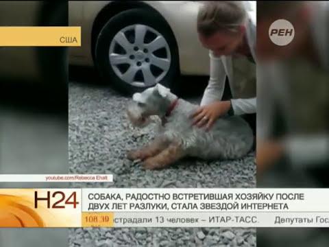 Собака от счастья упала в обморок