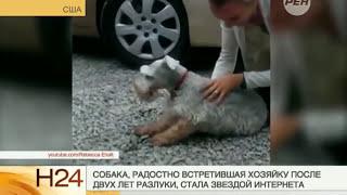Собака от счастья упала в обморок(Это видео умилило весь интернет — после 2 лет разлуки собака упала в обморок от счастья при виде хозяйки!, 2014-07-28T07:36:04.000Z)