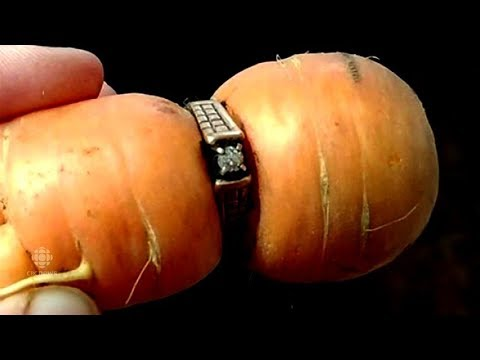 'It's quite something'. Missing diamond ring turns up on garden carrot