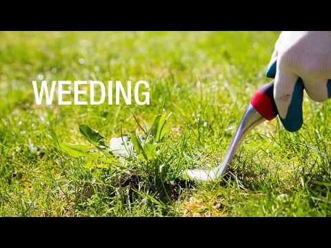 Tips For Proper Lawn Mowing Hobart Locals Should Know