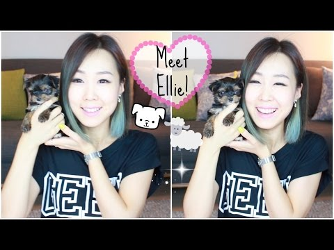 meet-ellie-♥-our-new-puppy!-(meejmuse)-part-1