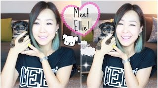 Meet Ellie ♥ Our New Puppy! (meejmuse) Part 1