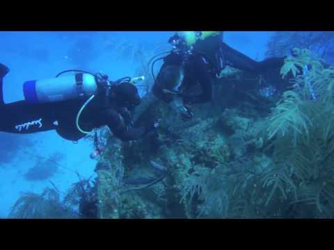 The Deep Blue Sea: An Introduction To Ocean Life