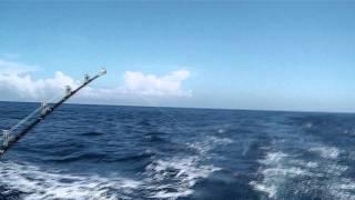 7月12日 安乗0603でヒットしました!30分程ファイトして魚影が見...