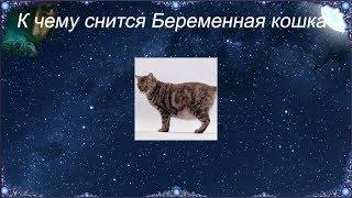 К чему снится Беременная кошка (Сонник)