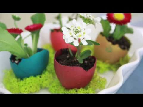 Egg Shell Flower Pot