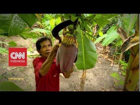 Profesor Pisang dari Dusun Ponggok | CNN Indonesia Heroes