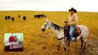Ковбои и мустанги. Часть 2  🐾 Про животных и людей 🌏 Моя Планета
