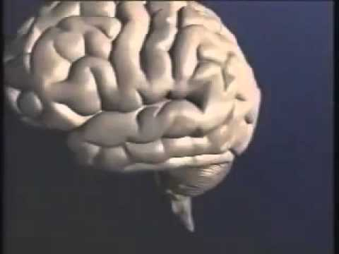 Brain Wave Vibration Curative Powers