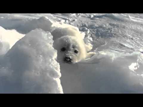 Seal.mp4