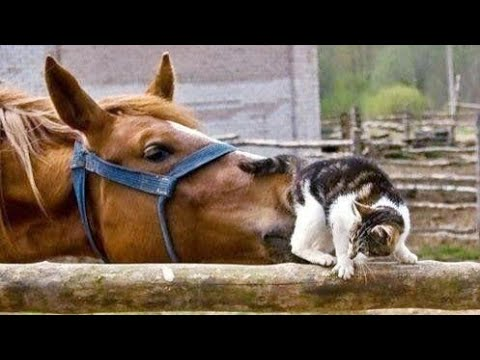 Top UNBELIEVABLE FUNNY ANIMALS! MOMENTS that will make you LAUGH!