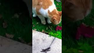 My cat playing with a lizard